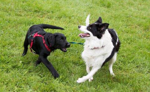 Over 40 hunder døde av den mystiske hundesykdommen i høst.
