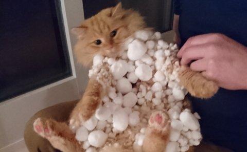 Katten var fullstendig dekket av snø da han kom hjem. – Det var bare øynene som syntes, sier Henning Malones. Mye av snøen ble fjernet før bildet ble tatt.