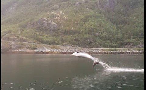VISTE SEG FRAM: Delfinene viste seg virkelig fram. Foto: Martin Søderholm.