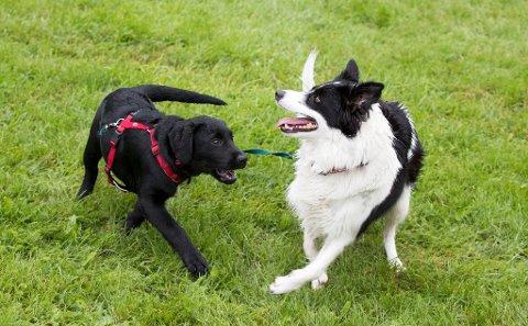 Hundesykdommen i Norge har skapt bekymring blant hundeeiere. Nå innføres det et nytt helseregister for dyr.