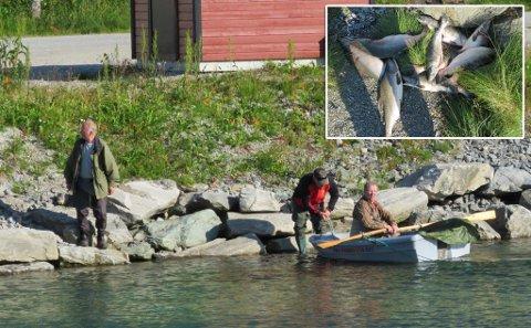 FRA AKSJONEN: Her ble det fisket opp 30 pukkellaks, senere 43 til, forteller Pål Reidar Fredriksen.