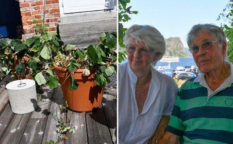 REAGERER PÅ RESTRIKSJONER: Ann og Anders Juel reagerer på kommunens strenge vanningsrestriksjoner. I hagen deres på Øya er det mange planter som nå sliter med tørken.