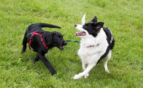 DYREBARE VENNER: Norske hundeeiere er glade i dyrene sine og vet å bruke penger på dem. Det har norske forsikringsselskap virkelig opplevd denne høsten.