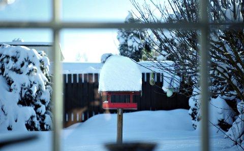 Kan bidra: Vinteren er en vanskelig tid for mange dyr. Vi kan bidra til å gjøre den lettere, blant annet med fuglemating, skriver innsender Jenny Rolness.
