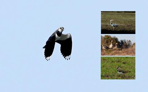 BJØNNESBEKKEN: Det er et rikt fugleliv i området.