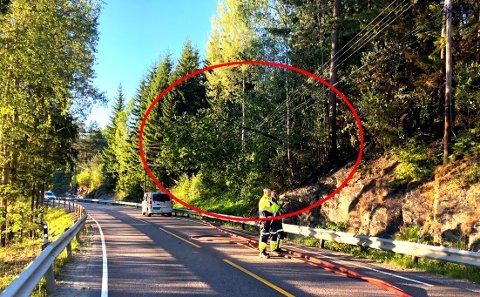 FORÅRSAKET BRANN: Her ligger treet oppå strømledningen langs veien. Trolig er dette årsaken til skogbrannen.