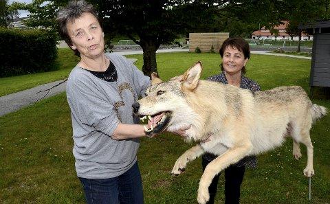 TILBAKE: Kristin Sørheim fikk i 2017 med seg Tingvoll-ulven hjem etter flere års opphold i Surnadal der daværende ordfører Lilly Gunn Nyheim var med på overrekkelsen av dyret. Det er meningen at ulven skal tilbake til Surnadal som en del av Trollheimsutstillingen, der kommunen nå leter etter et egnet sted for utstillingen.