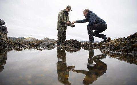 Arne Duinker og Ståle Ellingsen plukker snegler fra fjæren. Minutter etter har vi en veldig god forrett.