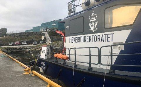 Kontroll: Fiskeridirektoratets patruljebåt Rind har kontrollert hummerteiner utenfor Kvitsøy og Randaberg de siste dagene.