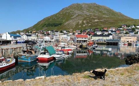Her har initiativtaker Harald Loe-Olsen ønsket å etablere en betongkai med 23 liggeplasser og lager for sjarkflåten i Nordkapp.