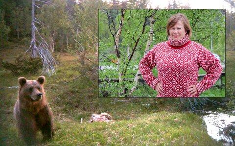 Tar grep: Nok en gang tar Siv Mossleth grep og stiller spørsmål til miljøvernminister om hvorfor Grane ikke får fellingstillatelse av bjørn.  Arkivbildet av denne bjørnen ble fanget inn av kamera med bevegelsesensor ved Litjfjellet i Svenningdal