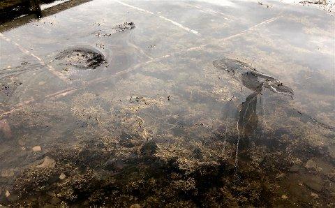 Her driver restene av oljesølet inn i støa ved naustet  til Geir Vollsæter. Foto: Privat