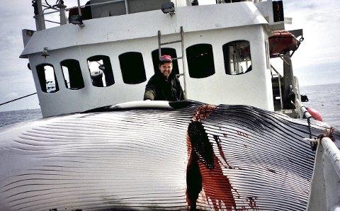 FØRSTEREIS I GAVE: Sandefjordingen Henrik Kulms ble med på ekspedisjon i en ukes tur, fulgte fangsten på nært hold og fikk anledning til å benytte flensekniven.Foto: Privat
