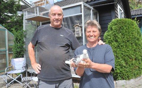 ORIENTERINGSDYKTIGEFUGLER:Knut og Hilde Albech hjemme i Ilaveien på Gjelleråsen der de driver med oppdrett av brevduer.