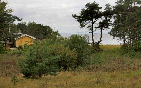 Den nye hytta er tenkt oppført på Vadholmen, umiddelbart bak 100-metersbeltet.