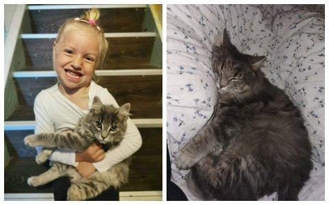 Katten «Grå» var Vanessa (4) sin beste venn, og beskrives av familien som kjærlig og snill.