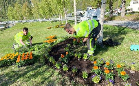 800 PLANTER: - Her i Vefsnaparken er det 800 planter bare i dette bedet, sier Torun Bjørkås, avdelingsleder park, som sammen med sommervikar Anders Nystad gjorde jobben.