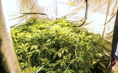 Dyrket cannabis: Mannen drev en plantasje i blokkleiligheten sin.