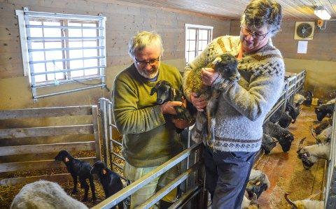 SAUEBØNDER: Ingrid Lekve og Jon Karlsen har tatt inn sauene sine fra beite. Bildet er fra da de åpnet gardsbutikk på gården Mattisrud i Løten.