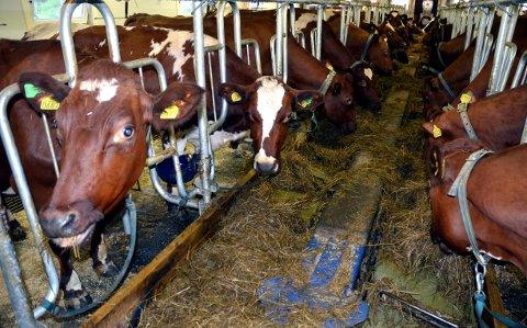 """Landbruket er en viktig næring i Valdres, blant annet for sysselsetting og bosetning, men utviklingen i Valdres-landbruket er urovekkende negativ, mener initiativtakerne bak prosjektet """"Framtidstru i Valdres-landbruket""""."""