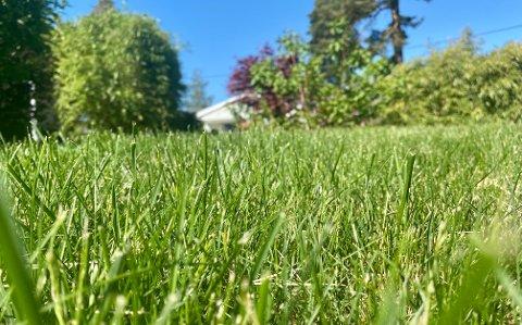 EN PLAGE FOR MANGE: Gresspollensesongen er rett rundt hjørnet, og overlapper med bjørkesesongen i år. Vanligvis får de som sliter med dette en pause.