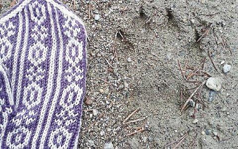 VOTT OG ULVESPOR: I helga ble det funnet det som trolig er ulvespor ved Kurøsta i Tynset.