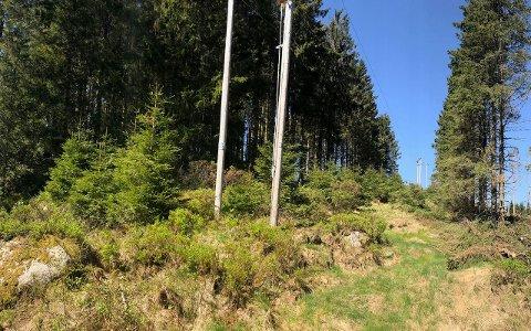 Agder Energi Nett har innført et driftstilskudd på 150 kr/m3 til skogeiere som avvirker skog helt inntil høyspentnettet.