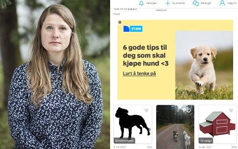 BER OM GREP: Åshild Roaldset i Dyrebeskyttelsen Norge ber om at Finn tar grep for å forebygge mot salg av ulovlige smuglerhunder i Norge.