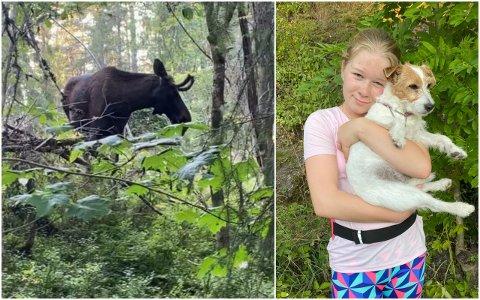 UBLIDT MØTE: En elg gikk mandag kveld til angrep på Maja Amundsen Melstveit og hunden Jackie.