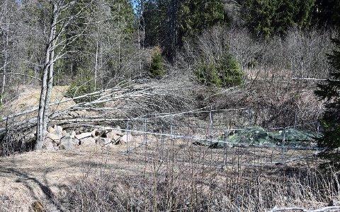 BEINRESTER: En turgåer kom over flere beinrester i dette skogholtet på Tranby ved E18.