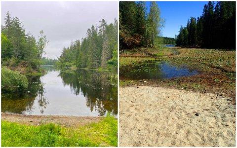 FORSKJELL: Til venstre ser du Sverttjern 27. juni i år. Til høyre ser du Svarttjern i juni 2018.