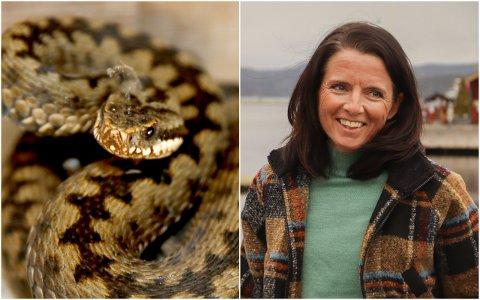 BLE BITT: – Jeg rakk ikke å se ormen, den lå i det høye gresset mens jeg løp i Botnemarka. Men plutselig kjente jeg en ugjenkjennelig smerte i ankelen, og så ned på de to bitemerkene, sier Jeanette Vika.