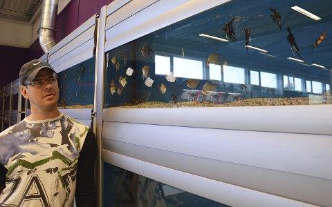 ÅPNER  LØRDAG: Ryno Du Toit åpner Buddy Gran på lørdag. Her ved et av flere akvarier i butikken.