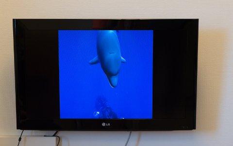 UNDER VANNOVERFLATEN: En skjerm viser hva pasienten ser inne i VR-brillen. Her er man i havet sammen med delfiner.