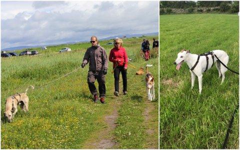 LEITEAKSJON: Hunden Louise (biletet til høgre) forsvann på Orre mandag morgon. Sidan då har eigar Ragnhild Schei (biletet til venstre) leita etter henne.