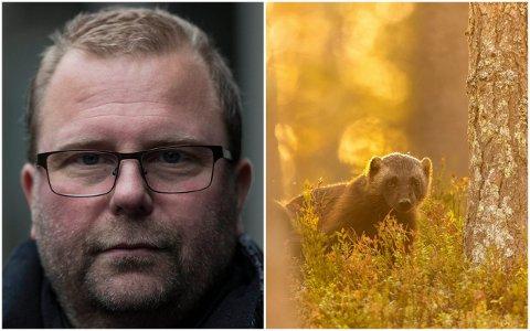 FOTOHOBBY: Bjørn Dykesteen er blitt tildelt ein gjev fototittel. Han har ei spesiell interresse for rovdyr, rovfuglar og naturlandskap. Det er han som har teke biletet av jerven til høgre.