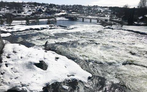 Følger med: Det ligger an til mye vann i Lågen når all snøen smelter. Kongsberg kommune er i tett dialog med NVE om flomfaren.