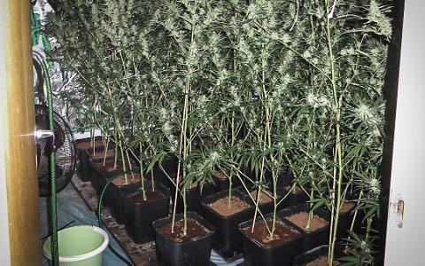I fjor sommer fant politiet 43 cannabisplanter i bopelen til en Kongsberg-mann. Rettssaken gikk fredag, uten den tiltalte mannen.