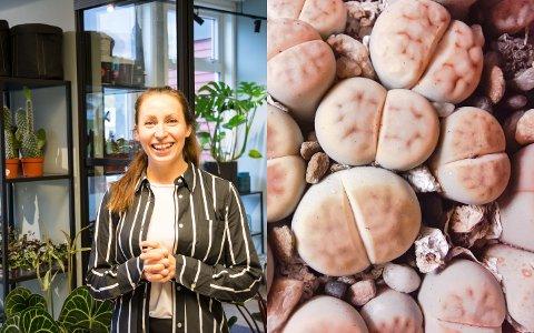 HVA LIGNER DETTE PÅ? Miriam Berre, ved Berre & Torg på Ramberg, satser på spesielle planter. Disse små sukkulentene, kalt lithops, setter fantasien i sving hos kundene.