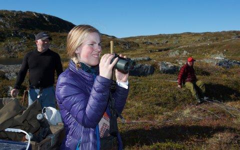 Sara Kristine Aleksandersen speider etter rein ved Sørfjorddalen lørdag formiddag. Telleprosjektet er forsinket fordi man så langt ikke har lykkes å samle dyrene. Foto: Ola Solvang