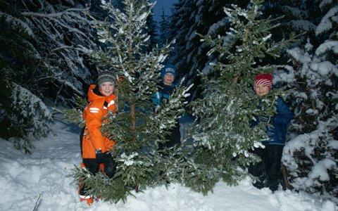 """TRE OG TRE: Marte Hanssen Moe (8), Mathias Hanssen Moe (9) og Birk Nyheim (9) med dagens """"fangst""""."""