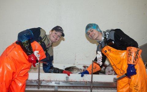 GJØR DET GODT: På de beste dagene skjærer Kornelia Sand (16) og Isak Tøllefsen (15) 50 kilo torsketunger i timen, som gir en timelønn på 2.000 kroner.
