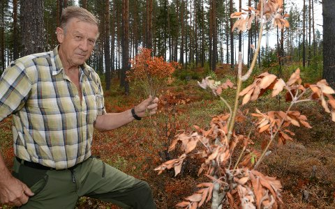 ROSER: Ole Håkon Venstad berømmer jaktlaget som torsdag felte ulven i Våler.