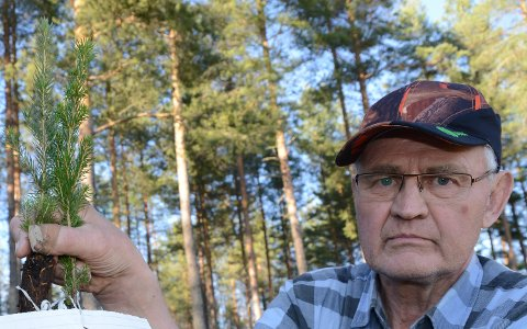 KLAR OPPFORDRING: – Det må plantes mye mer enn det gjøres årlig nå, sier skogeier Oddvar Glorvigen.
