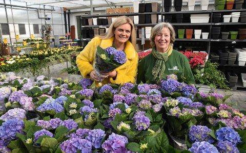 I GANG IGJEN: Daglig leder Liv Øverby Bjørnebye (til venstre) og hagesenterleder Anita Nysæter har startet en ny Blomsterkroken-sesong.