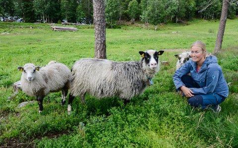 - Vi fryktet en sommer med store tap av lam til gaupe, etter at myndighetene sa nei til å ta ut noen dyr gjennom en skadefelling i vår. Det gjør vondt å vite at dyrene lider, sier sauebonde Janne Leiråmo Johansen på gården Engvoll i Langvassgrenda.