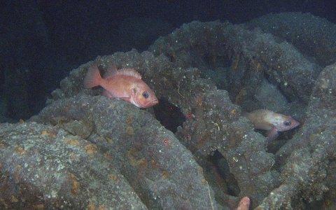 Funnsted: Dette bildet fra ankervinsjen i baugen av skuta er et av mange bevis, som havforskerne har samlet inn. De er nemlig sikre på at dette er et skip som gikk ned for 108 år siden.