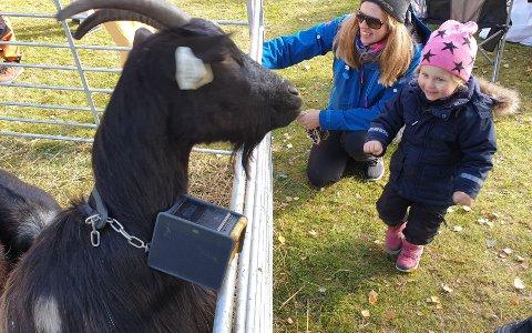 HOPPENDE GEIT: Oi der kom geiten opp på gjerdet! Det var gøy syns Linnea som tok et lite skritt tilbake til mamma Stina.