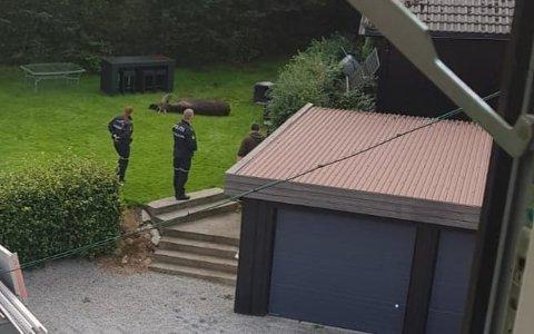 Slik så det ut i hagen til Simon Berntsen etter at elgen var skutt.