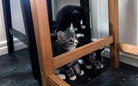 Kattungene som denne uka ble dumpet ved Børtevann, og som har midlertidig opphold hos familien Kingsrød-Hovden, er ikke de eneste som har blitt forlatt av sine eiere i dette området.